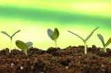Регулятори росту,інокулянти